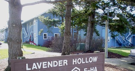Lavender Hollow
